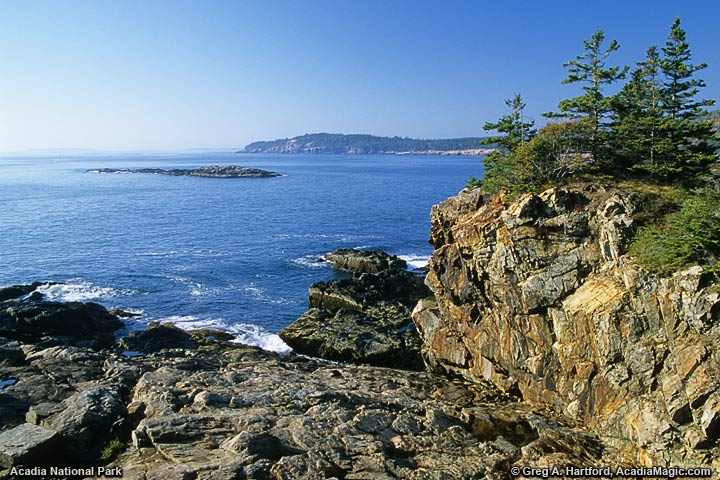 View of Otter Cliff from Great Head Trail in Acadia National Park