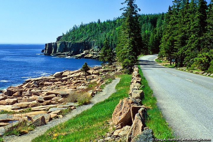 The Ocean Path heading toward Otter Cliff in Acadia