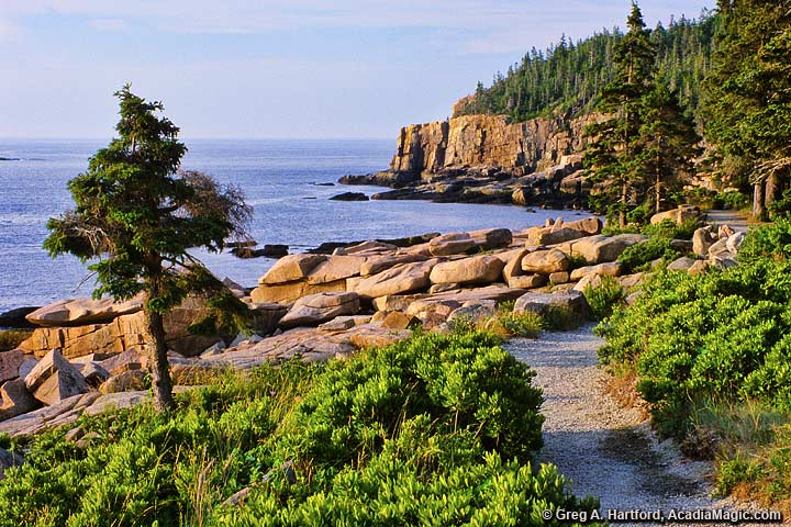 South end of the Ocean Path near Otter Cliff in Acadia