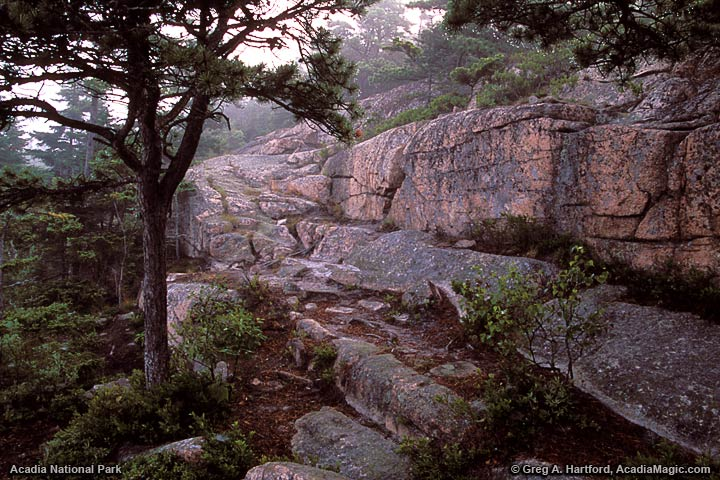 Pink Granite on Hiking Trail in Acadia National Park