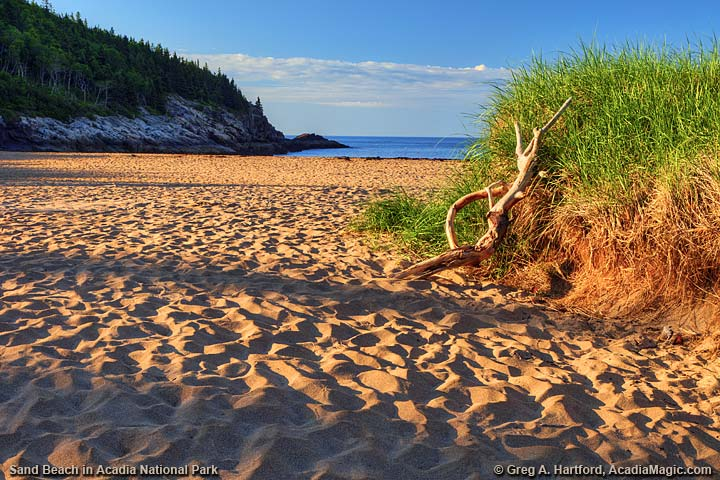 Driftwood leaning against Sand Dune at Sand Beach in Bar Harbor
