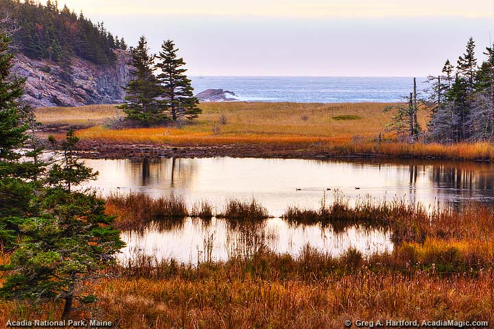 Autumn view of Sand Beach from the north side in Acadia National Park