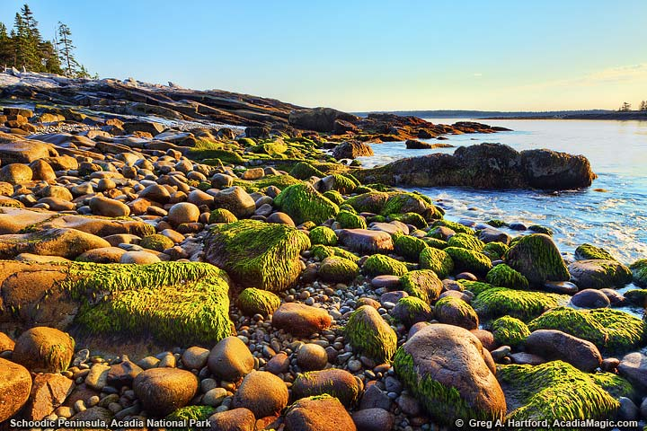 Seaweed on rocks at shoreline during sunrise