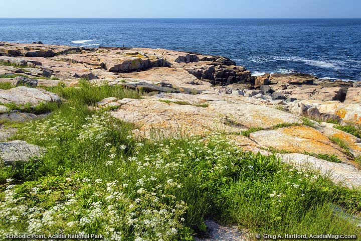 View of Shore at Schoodic Point