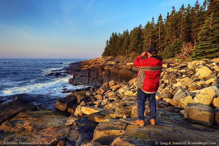 Bird watching at Schoodic Point