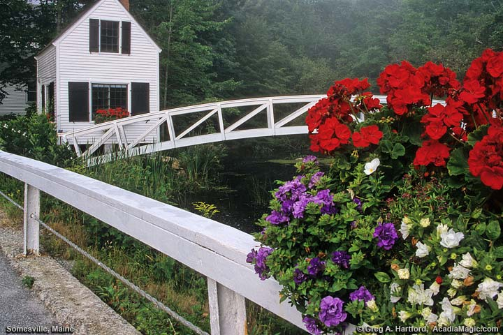 Somesville walking bridge with red flowers