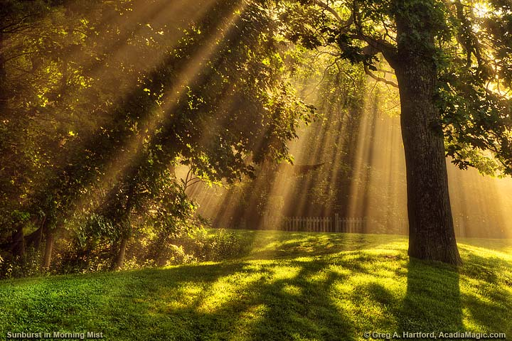 Rays of light bursting through the tree leaves and fog