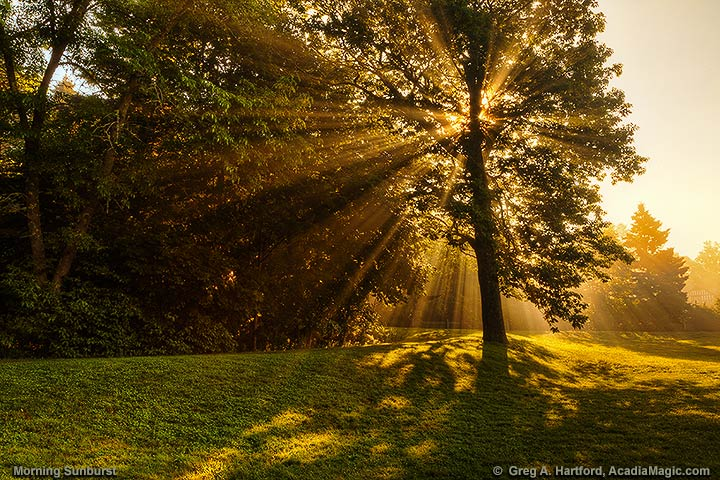 Rays of sunshine bursts through the tree branches and leaves