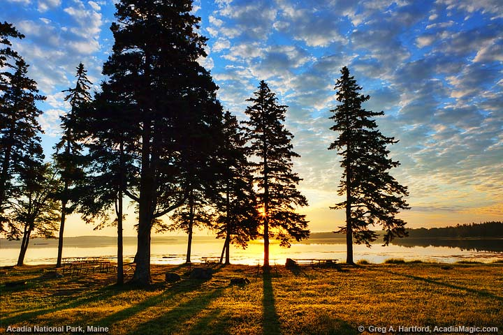 Surise with silhouette of trees at picnic area in Acadia