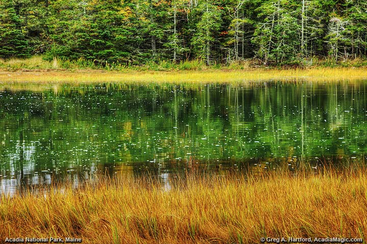 Autumn at Thompson Island in Trenton, Maine in Acadia
