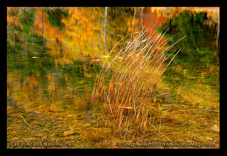 Autumn on The Tarn in Acadia National Park, Maine