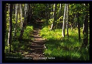 Trail in Acadia
